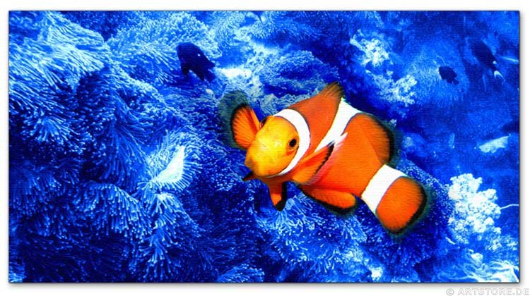 Wandbild Jack Dyrell CLOWN FISH