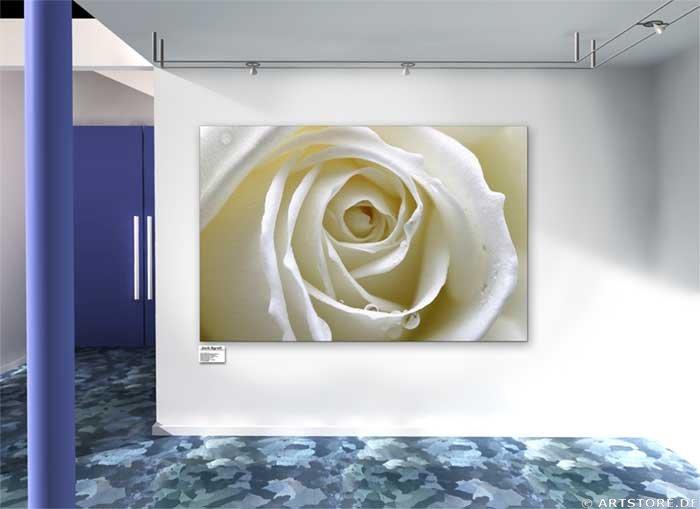 Wandbild Jack Dyrell WET WHITE ROSE Wohnbeispiel