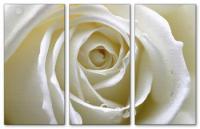 Wandbilder Jack Dyrell WHITE ROSE EDITION