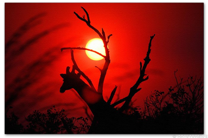 Wandbild Jack Dyrell AFRICAN SUNSET