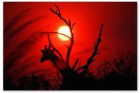 Wandbilder Jack Dyrell AFRICAN SUNSET
