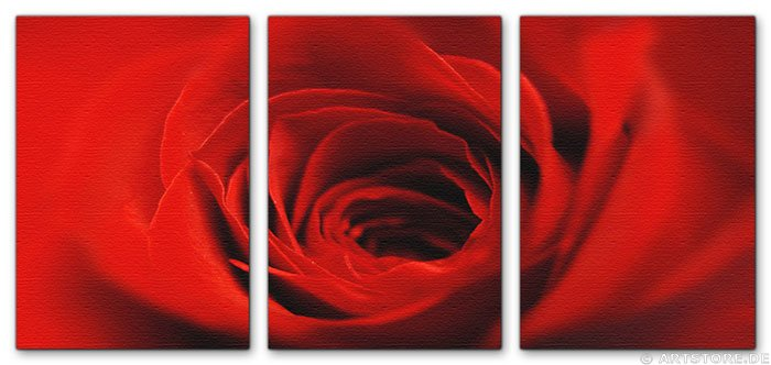 Wandbild Jack Dyrell RED BEAUTY ROSE