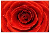 Wandbilder Jack Dyrell WET RED ROSE