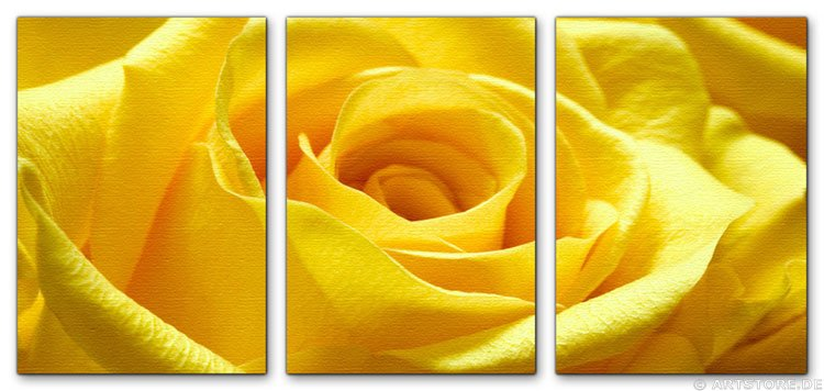 Wandbild Jack Dyrell YELLOW ROSE - EDITION