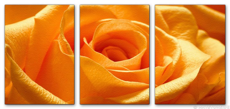 Wandbild Jack Dyrell ORANGE ROSE - EDITION