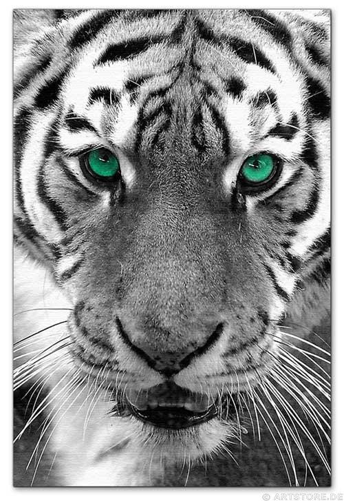Wandbild Jack Dyrell EYE OF THE TIGER