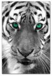 Wandbilder Jack Dyrell EYE OF THE TIGER