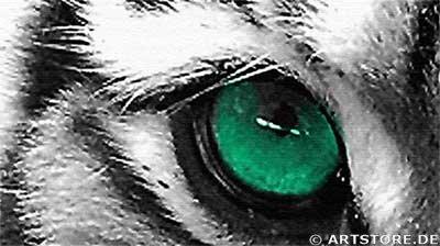 Wandbild Jack Dyrell EYE OF THE TIGER Detailausschnitt