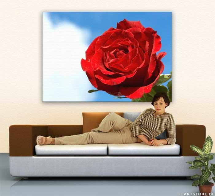 Wandbild Jack Dyrell SUNSHINE ROSE Wohnbeispiel