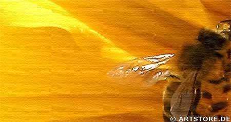 Wandbild Jack Dyrell SUMMERTIME - SUNFLOWER Detailausschnitt