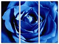 Wandbilder Jack Dyrell BLUE ROSE - EDITION
