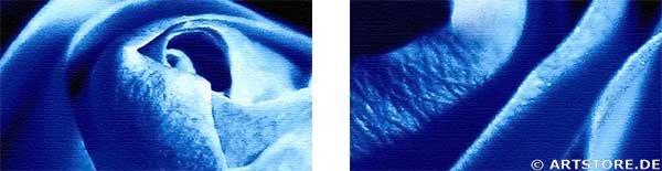 Wandbild Jack Dyrell BLUE ROSE - EDITION Detailausschnitt