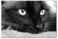 Wandbilder Jack Dyrell BLACK CAT