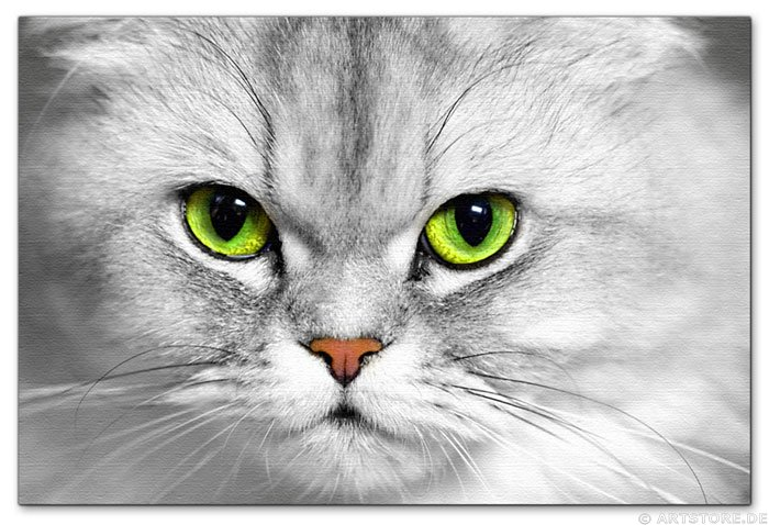 Wandbild Jack Dyrell DEEP EYES - CAT