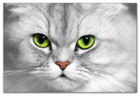 Wandbilder Jack Dyrell DEEP EYES - CAT