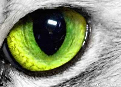 Wandbild Jack Dyrell DEEP EYES - CAT Detailausschnitt