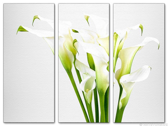 wandbilder jack dyrell calla edition blumen kunstdrucke leinwand keilrahmen. Black Bedroom Furniture Sets. Home Design Ideas