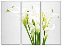 Wandbilder Jack Dyrell CALLA EDITION - Blumen