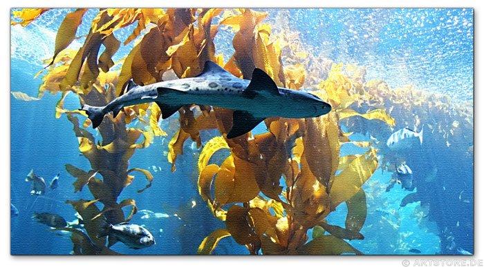 Wandbild Jack Dyrell TIGER SHARK