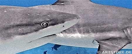 Wandbild Jack Dyrell GREAT SHARK Detailausschnitt