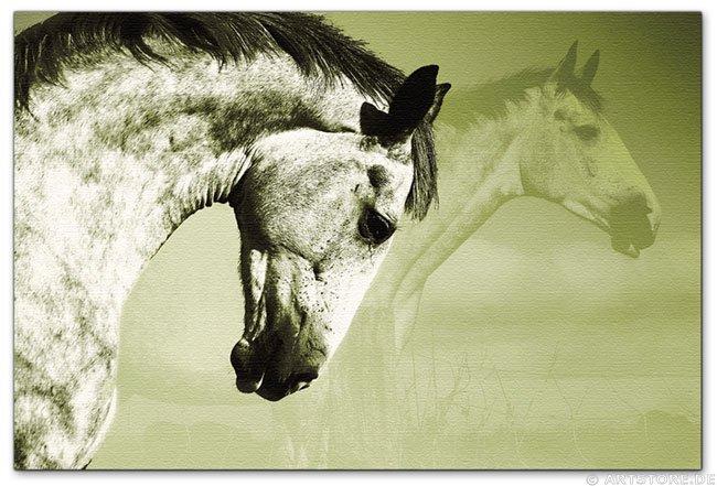Wandbild Jack Dyrell BEAUTY HORSE 2