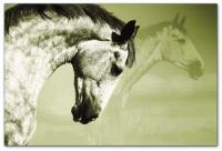 Wandbilder Jack Dyrell BEAUTY HORSE 2