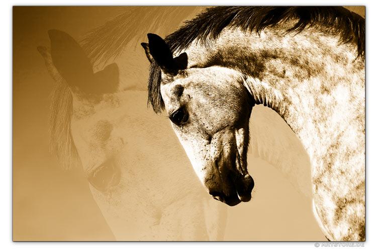 Wandbild Jack Dyrell BEAUTY HORSE