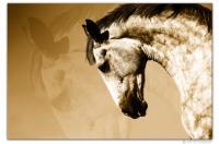 Wandbilder Jack Dyrell BEAUTY HORSE