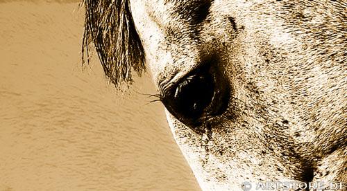 Wandbild Jack Dyrell BEAUTY HORSE Detailausschnitt