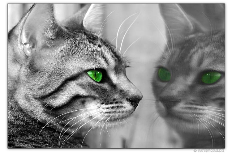 Wandbild Jack Dyrell GREEN EYES CAT