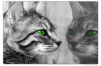 Wandbilder Jack Dyrell GREEN EYES CAT