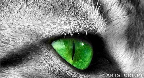 Wandbild Jack Dyrell GREEN EYES CAT Detailausschnitt
