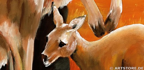 Wandbild Mia Morro KANGAROOS - AUSTRALIA Detailausschnitt