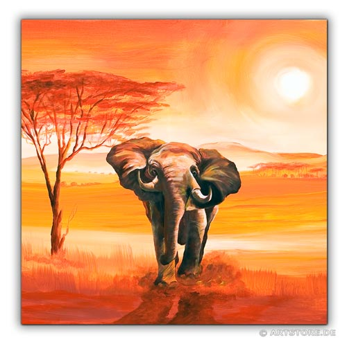 wandbilder mia morro elefant afrika bilder edition kunstdrucke leinwand keilrahmen. Black Bedroom Furniture Sets. Home Design Ideas